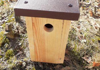 Zdjęcie: Ptasia deweloperka w parku Hevelianum