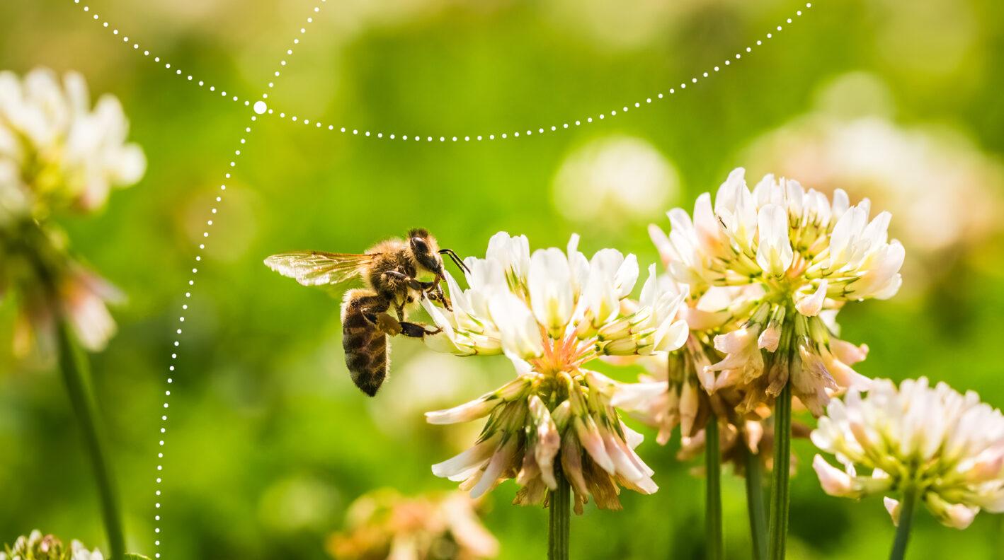 Terenówki przyrodnicze: owady