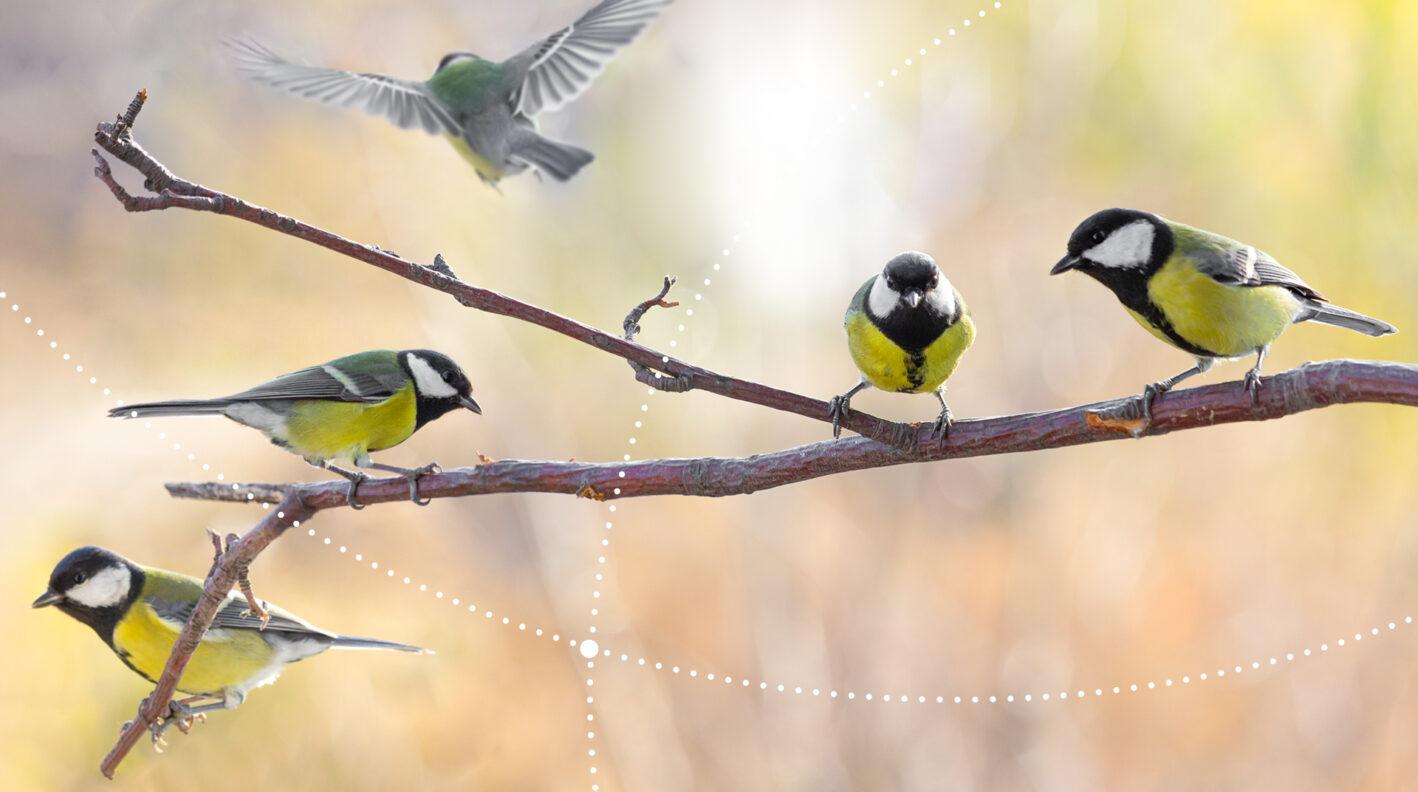 Terenówki przyrodnicze: ptaki